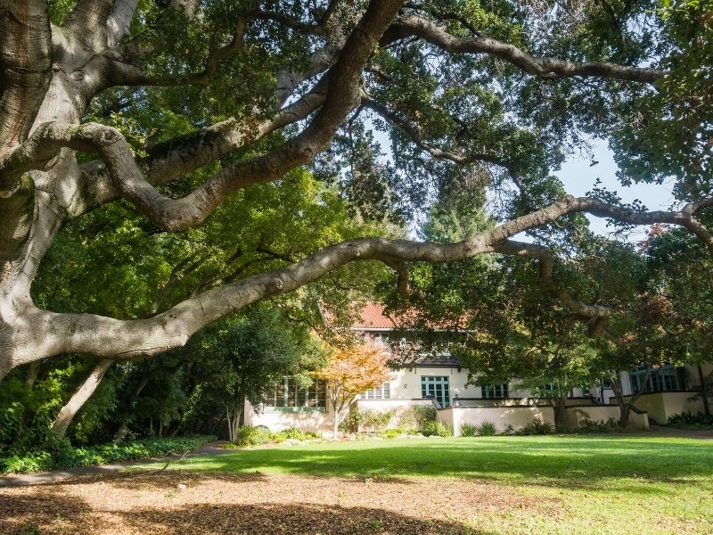 pic of UC Berkeley
